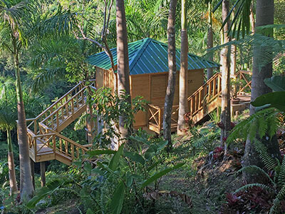 """A treehouse at a PR rainforest hotel."""