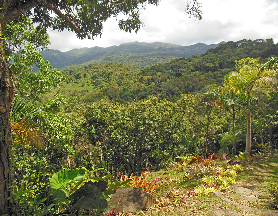 """PR Treehouse, Yunque Hotel, PR Rainforest Hotel, PR Eco Resort, PR Ecolodge, Yunque Lodging and PR Glamping"""